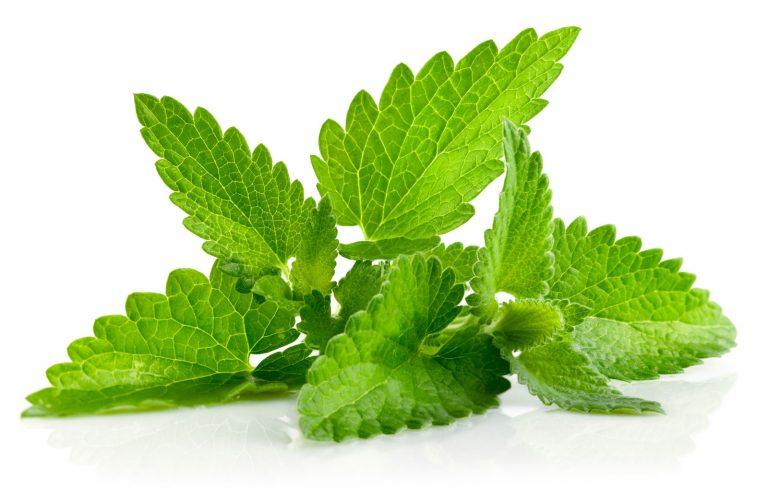 mzr3ty_mint-leaves