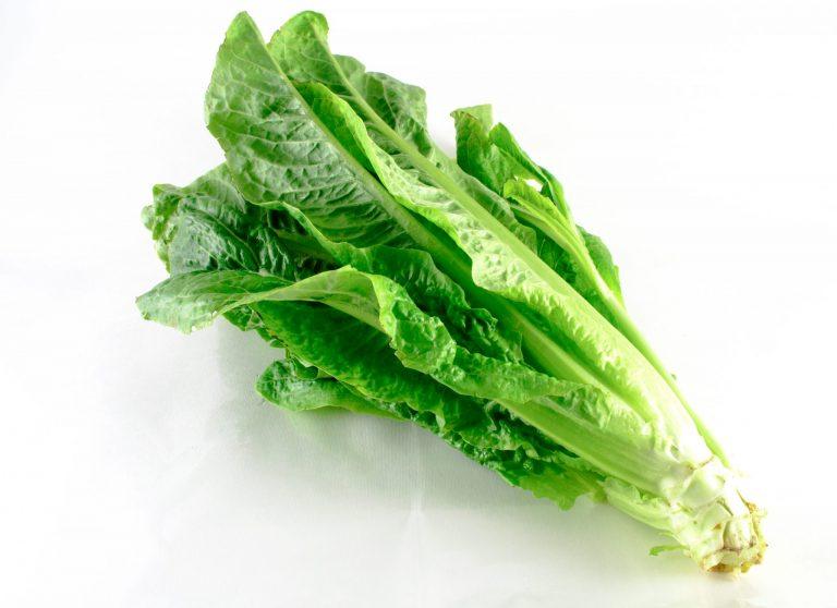 Mzr3ty_cos_lettuce (balady)