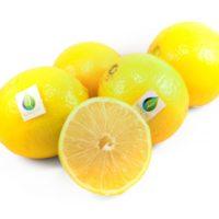 mzr3ty_adalia_lemon