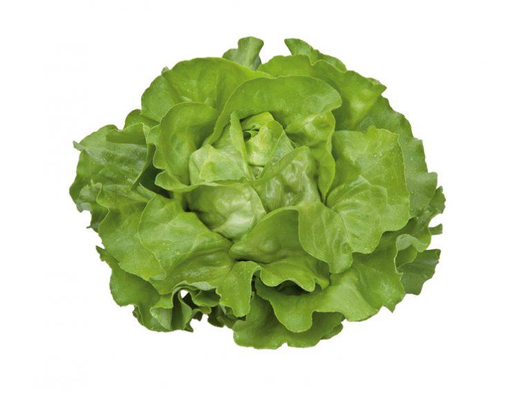 Mzr3ty Green Butterhead Lettuce